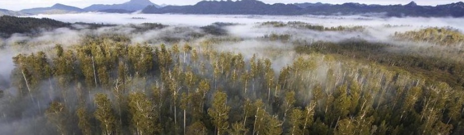 EPN Brings the World Together To Protect Endangered Forests, Communities and our Climate