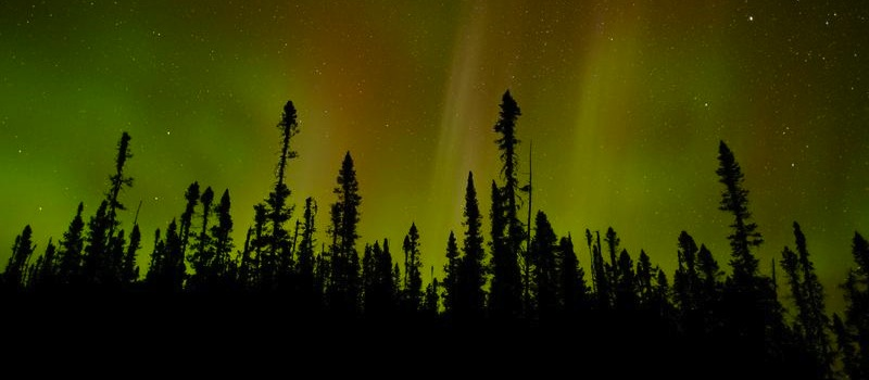 "Greenpeace, Kimberly-Clark Celebrate ""Wood"" Anniversary"