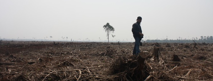 Santander Says No Further Financing for APRIL Because of Deforestation
