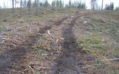Please don't pulp the last Swedish old-growth forests!