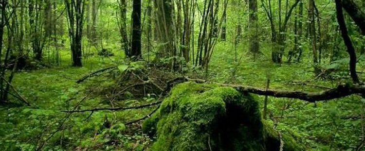 Local NGOs and EPN send letter of concern over planned pulp mill and biorefinery in Estonia