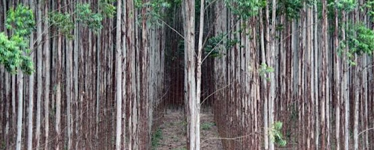 Discussion document on genetically modified trees