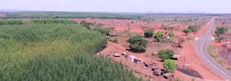 A Land Grab for Pulp – a report on Portucel Mozambique