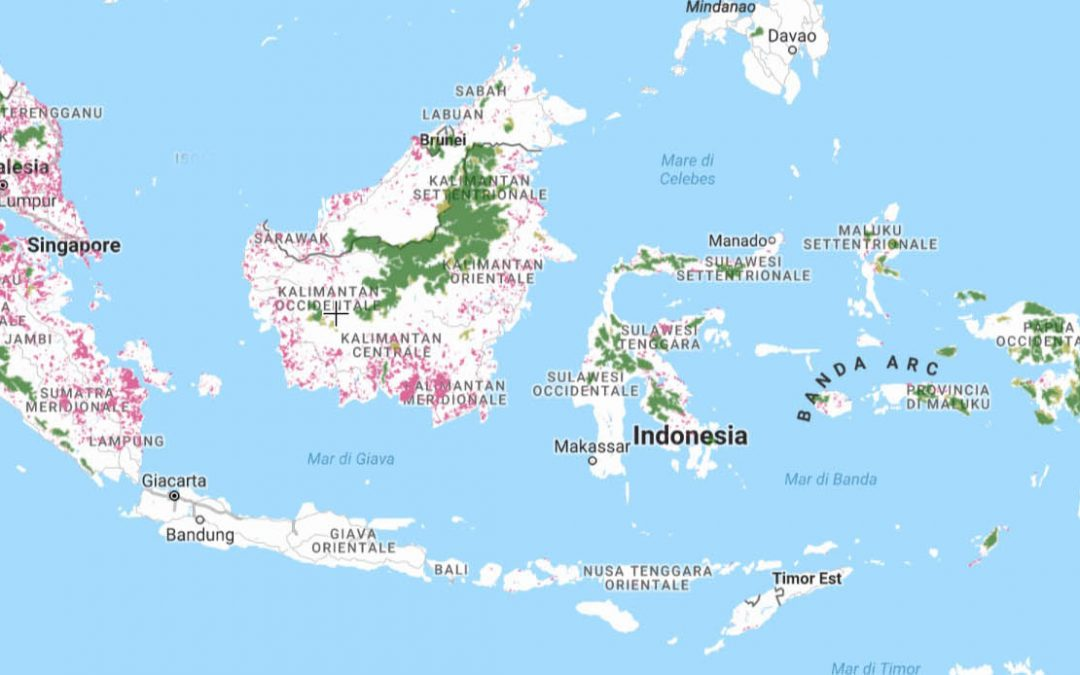 Indonesia's plantation lobby challenges environmental law