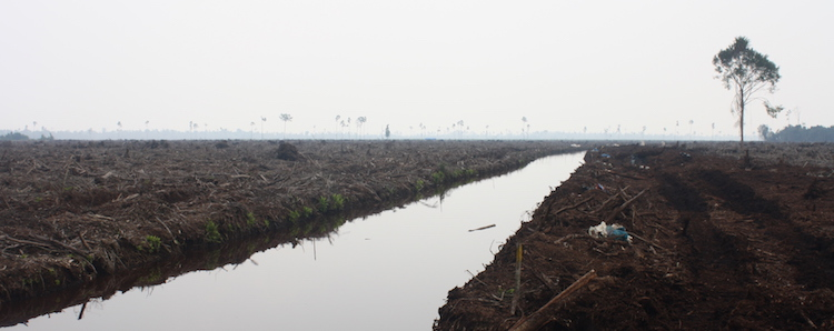 APRIL fails to reverse Indonesian peat protection regulations