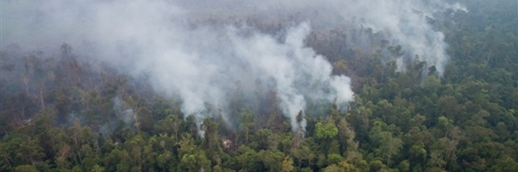 Bank policies that protect peatlands and reduce deadly fires in Indonesia are long overdue