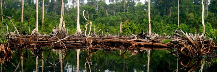 Indonesian civil society calls on government for transparency and accountability to protect and restore peatlands and forests