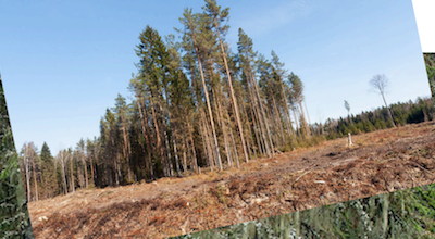 """International NGOs come together to support Estonians challenging the proposed Est-For 'biorefinery"""" and pulp mill"""