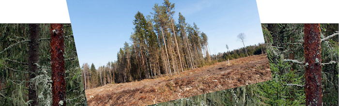 "International NGOs come together to support Estonians challenging the proposed Est-For 'biorefinery"" and pulp mill"