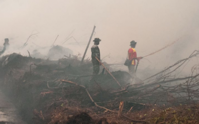 More peatland fire disasters for Indonesia?