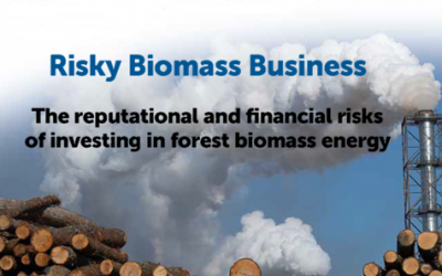 Warning issued to investors: Forest biomass is risky business