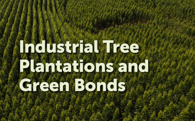 Green bonds used to finance damaging industrial tree plantations