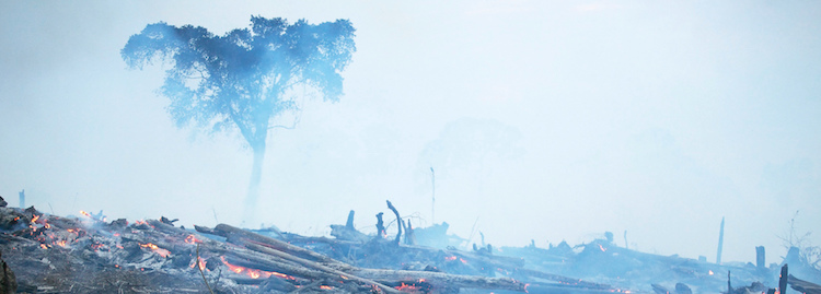 New Study Reveals Asia Pulp & Paper (APP) Involved in Hundreds of Conflicts with Local Communities as Haze Crisis in Indonesia Intensifies