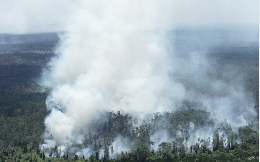 Pulp Industry Locks in Fire Risk on Indonesia's Peatlands