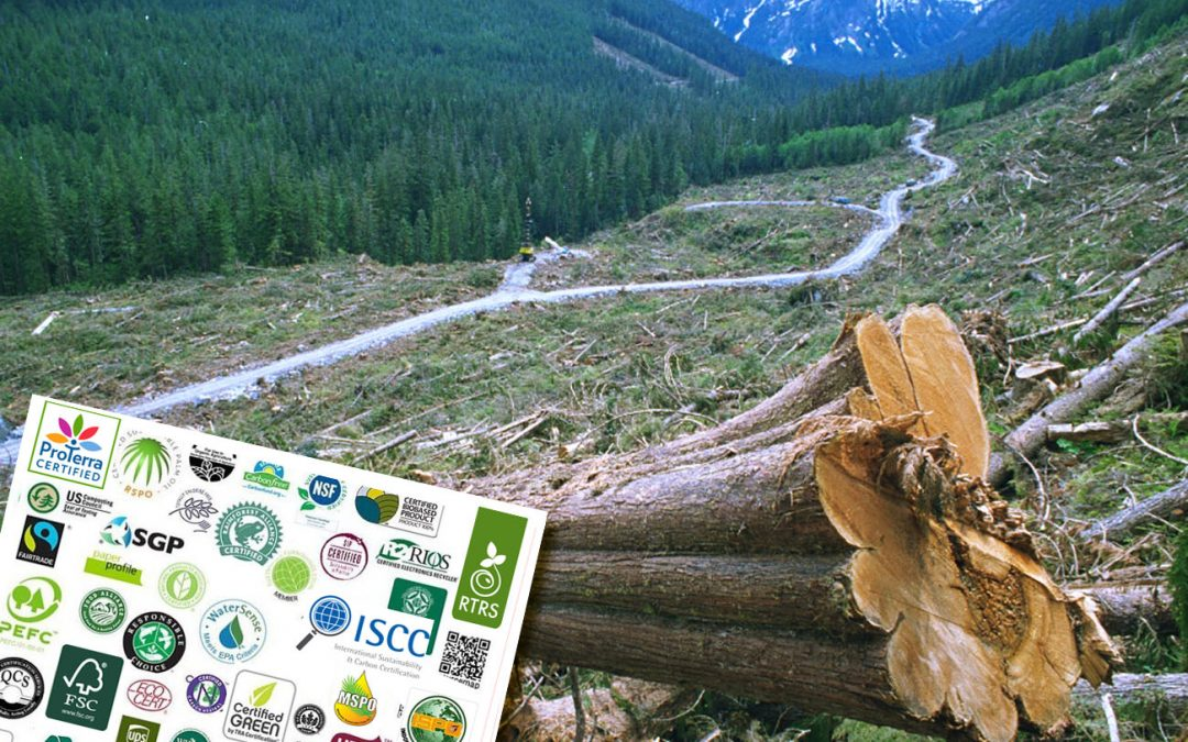 Can certification save the world's last remaining forests?