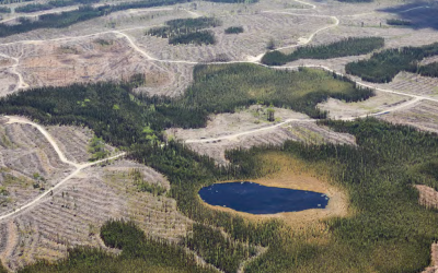 The Cost of Industrial Logging in Canada's Boreal Forest